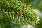 umelé vianočné stromčeky z 3d trojrozmerného ihličia